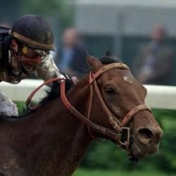 Mind That Bird Horse | Belmont Stakes Predictions: Mine That