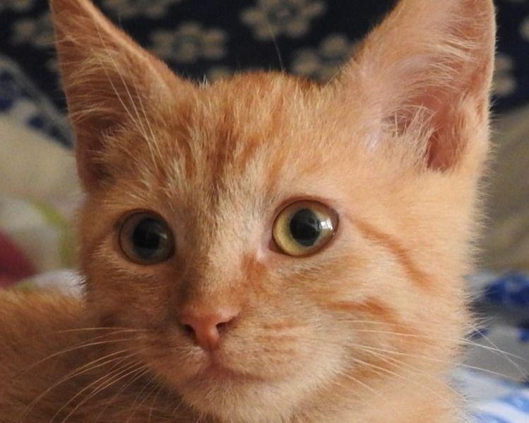 Close up micio pics com