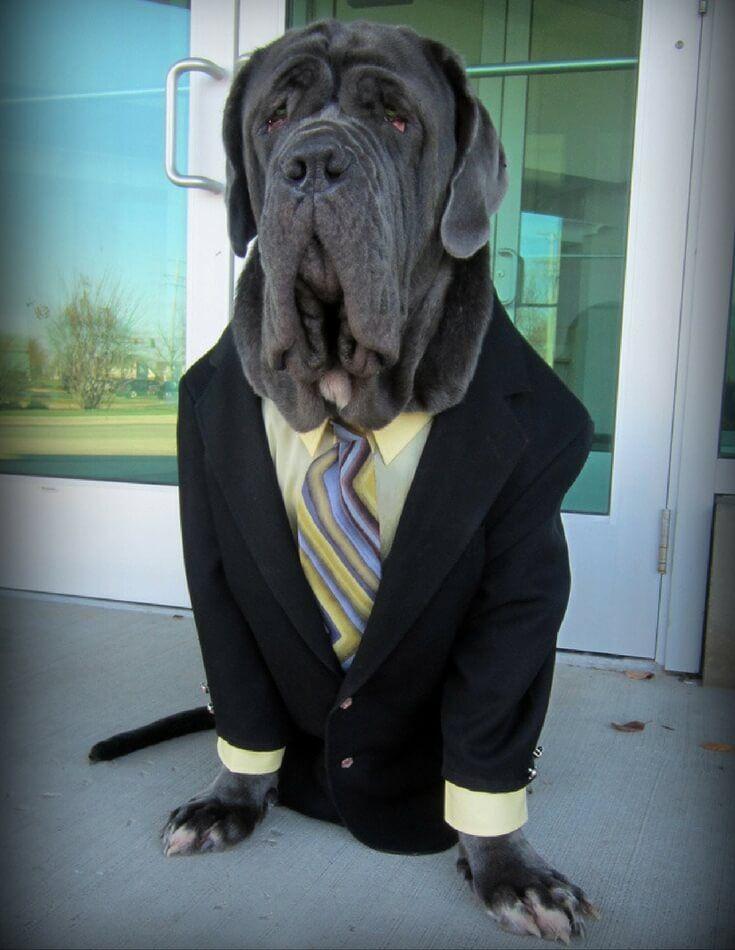 fun-dog-costume