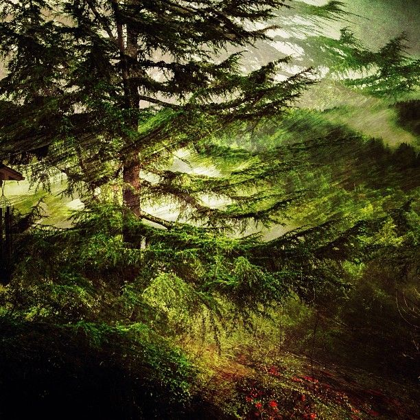 Saturated Forest Instacanv As Photo By Christianernphoto Nature Stock Photos