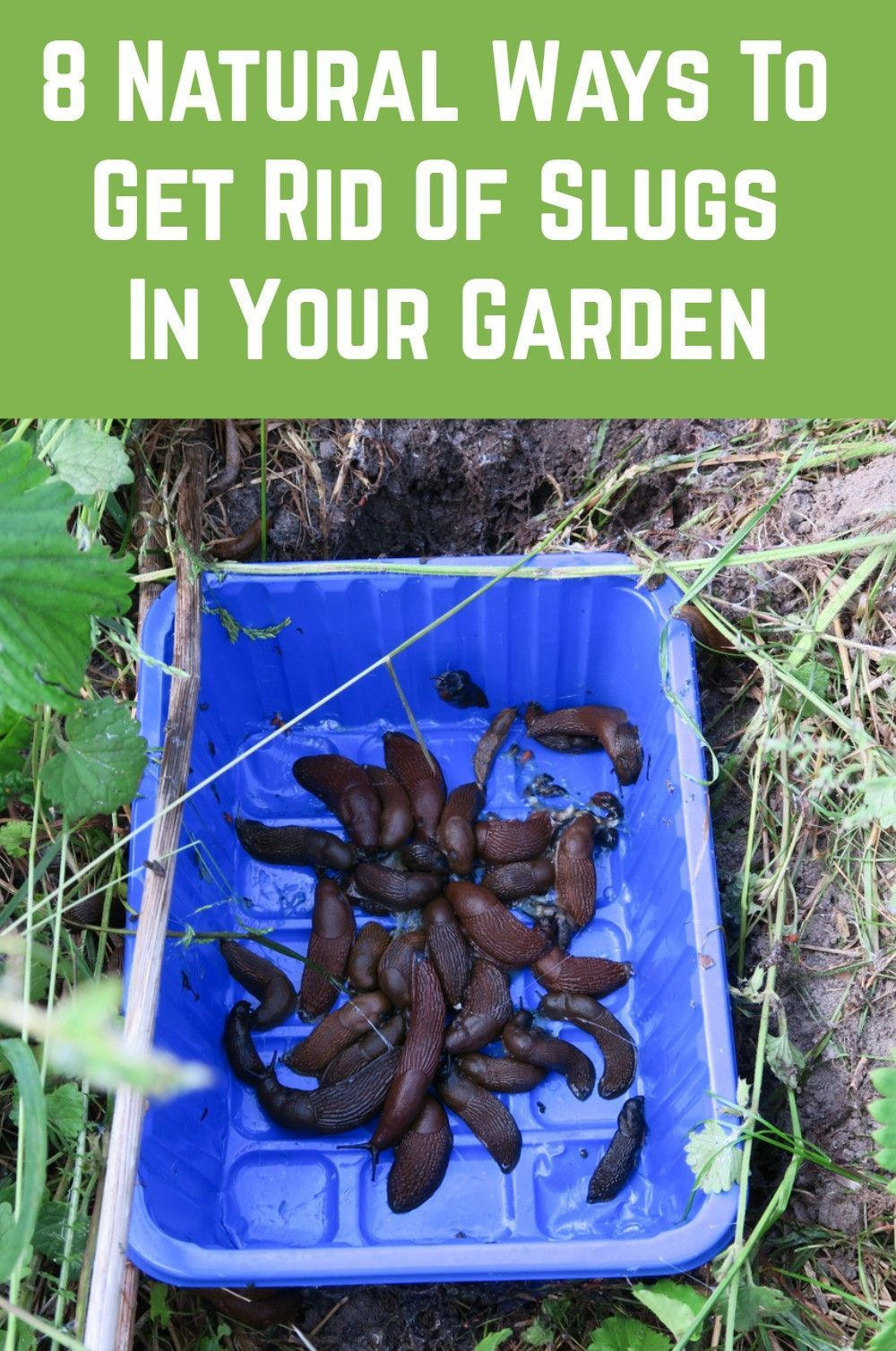 8 Natural Ways To Get Rid Of Slugs In Your Garden in 2020 ...