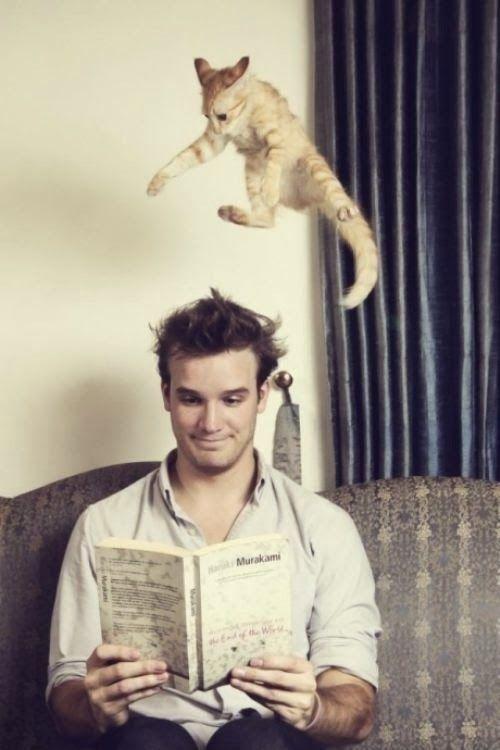 s7reetsahead: Funny cats