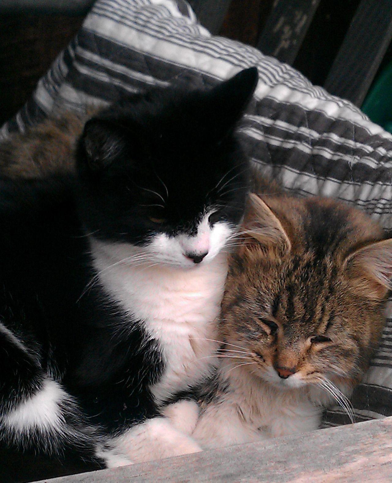 CyBeRGaTa Cats, Memes, New Mexico http//cybergata