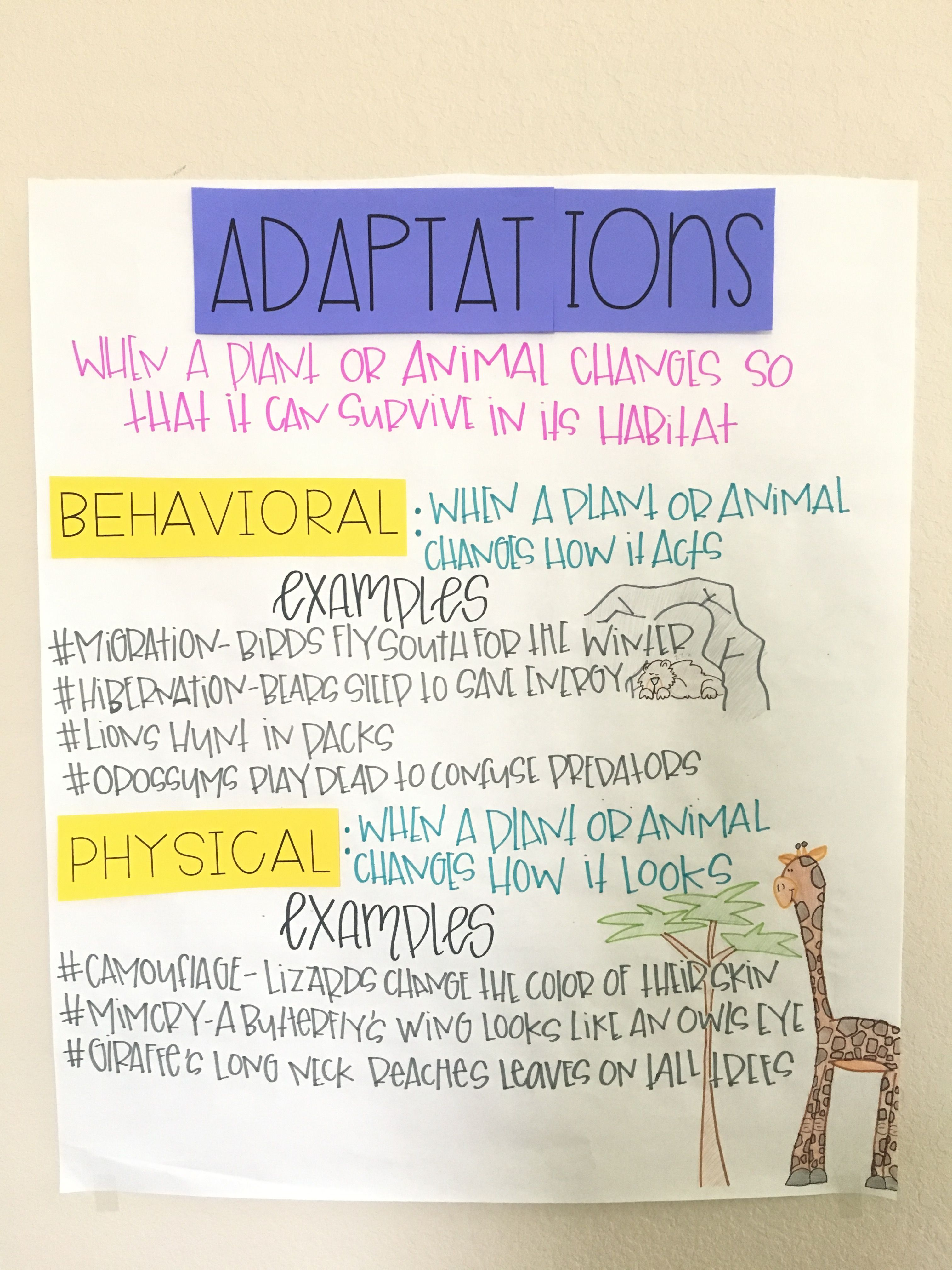 Animal Adaptations Activity and Interactive Notebook Worksheets    Adaptations science [ 4032 x 3024 Pixel ]