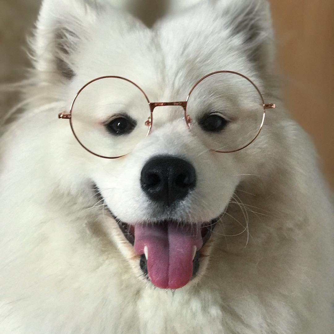 Mayapolarbear Dog Dog Education Puppy Dengan Gambar