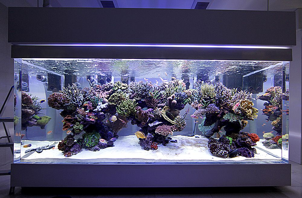 Dsps Tank From Thailand 1000 Gallon Page 165 Saltwater Aquarium Tanks Saltwater Aquarium Fish Fish Aquarium Decorations