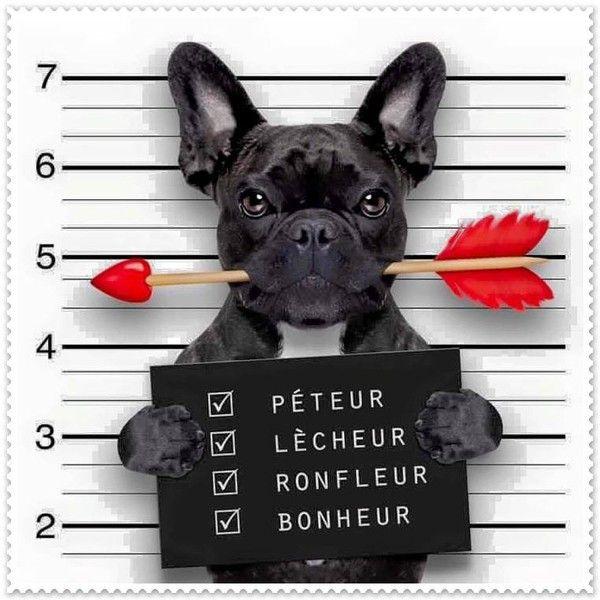 image humour animaux | Photos drôle, insolite et bizarre #5 | Soyez le changement que ...