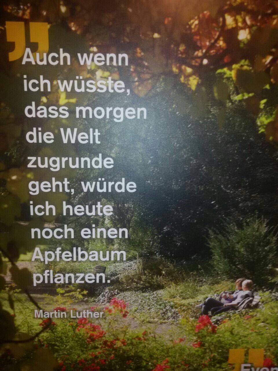 Pin Von Elke Wesche Auf Spruche Apfelbaume Pflanzen Apfelbaum Martin Luther