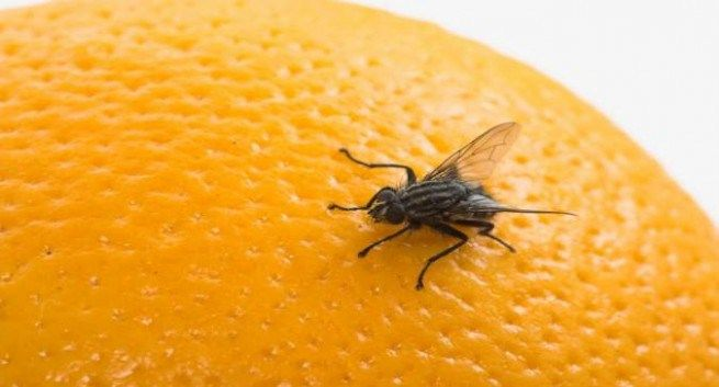 Houseflies makes you prone to infection and diseases ...