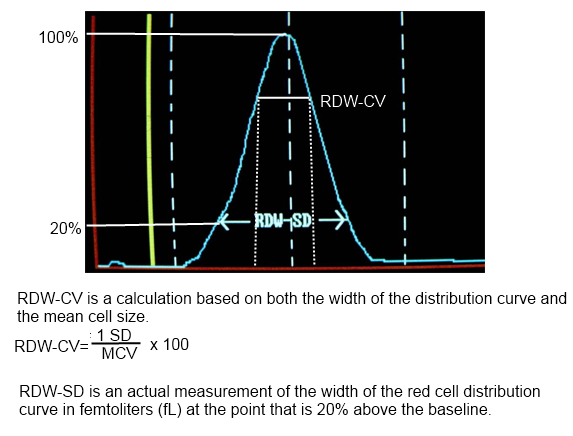 Red Blood Cell Distribution Width (RDW): Definition and