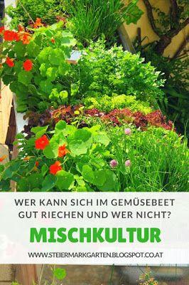 Mischkultur Welche Gemuse Und Krautersorten Sich Gut Riechen Konnen Mischkultur Pflanzen Stauden Pflanzen