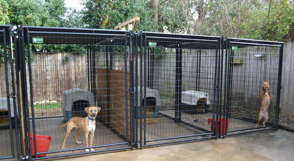 The Real Apbt Dog Kennel Setups And Designs Puppies