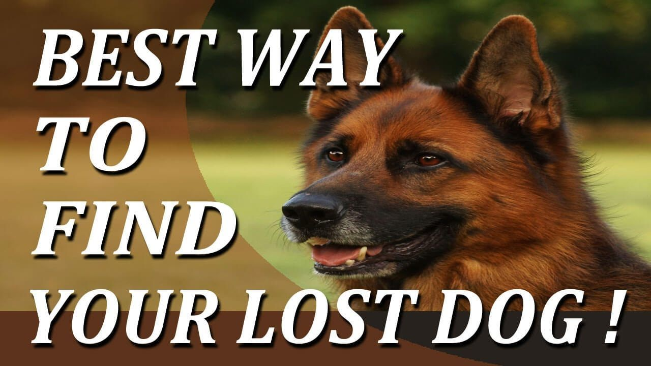 Best way to find a lost dog