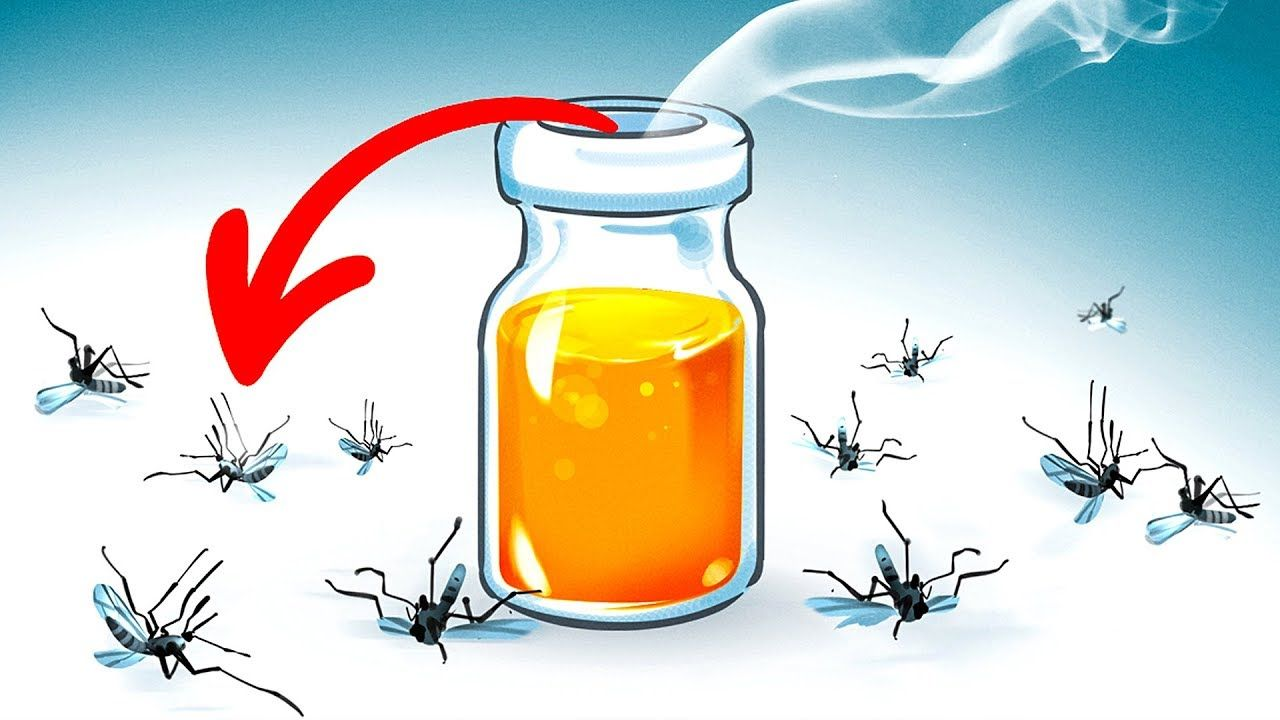 15 Natural Ways To Get Rid Of Mosquitoes In Your Yard Bright