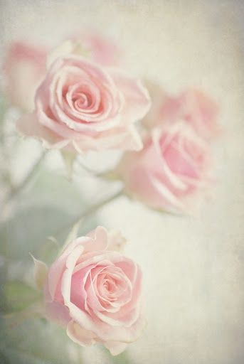 Soft Pink Roses Flowers Photo Vintage Iphone Wallpaper