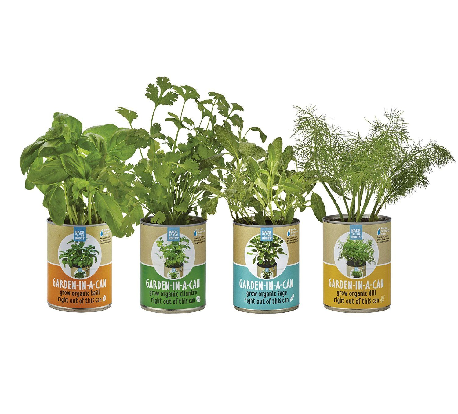 Garden In A Can  #GardenInACan  #Gardens  #Cans  #BackToTheRoots  #Back  #Roots  #Grow  #Organic  #Herbs  #Basil  #Cilantro  #Dill  #Sage  #Hobbies  #Kamisco