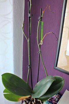 Orchidee blüht nicht mehr: Die besten Tipps #patioplants