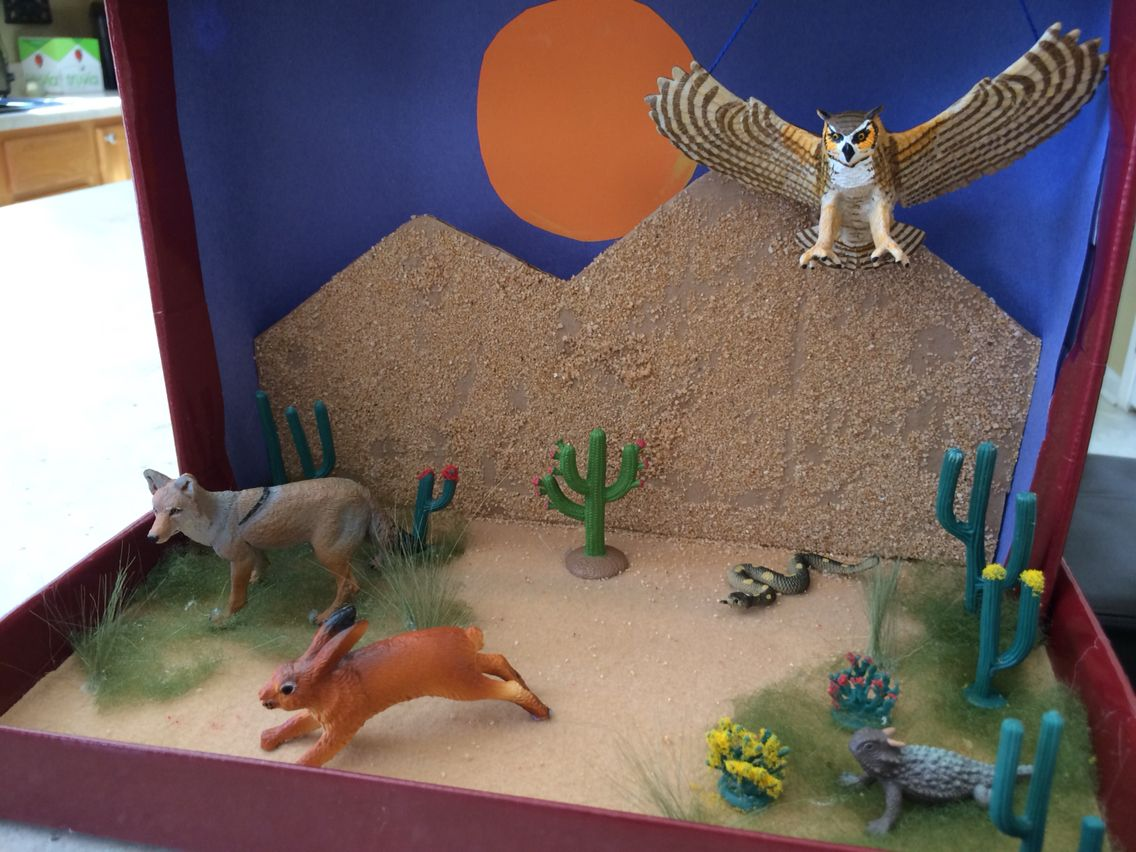 Desert Biome Project