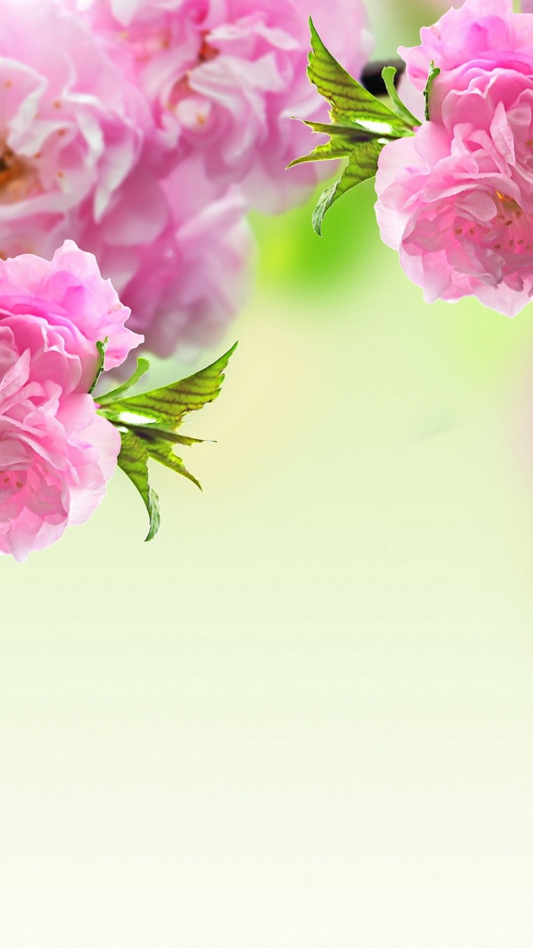 Spring Flowers Iphone 6 Plus Wallpaper 14130 Flowers Iphone 6 Plus