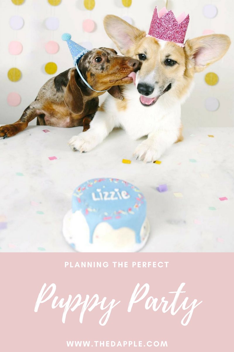 Planning The Perfect Birthday Party For Your Dog Including Pupcakes Gifts And Fun