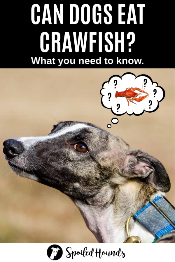 Can Dogs Eat Crawfish? What To Know About Dogs and