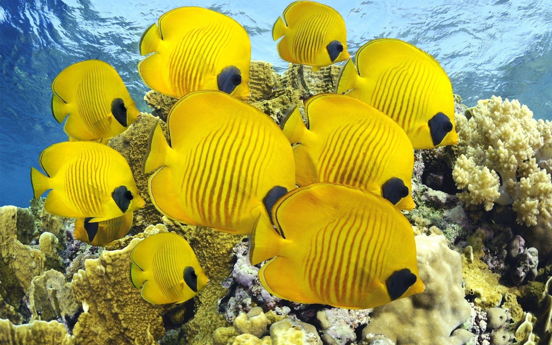 yellow-yellow-249239 - Bellezapura