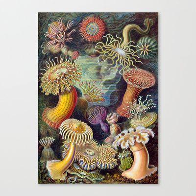 SEA URCHINS Canvas Print by Kathead Tarot - $85.00