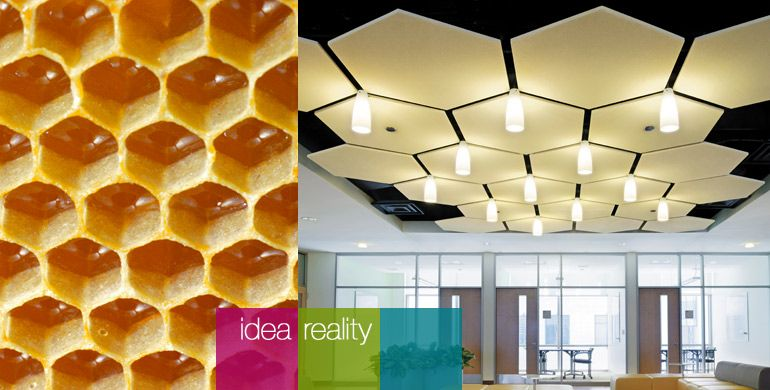 Armstrong Honeycomb Acoustical Panels  Commercial Design  Ceiling Ceiling panels Ceiling design
