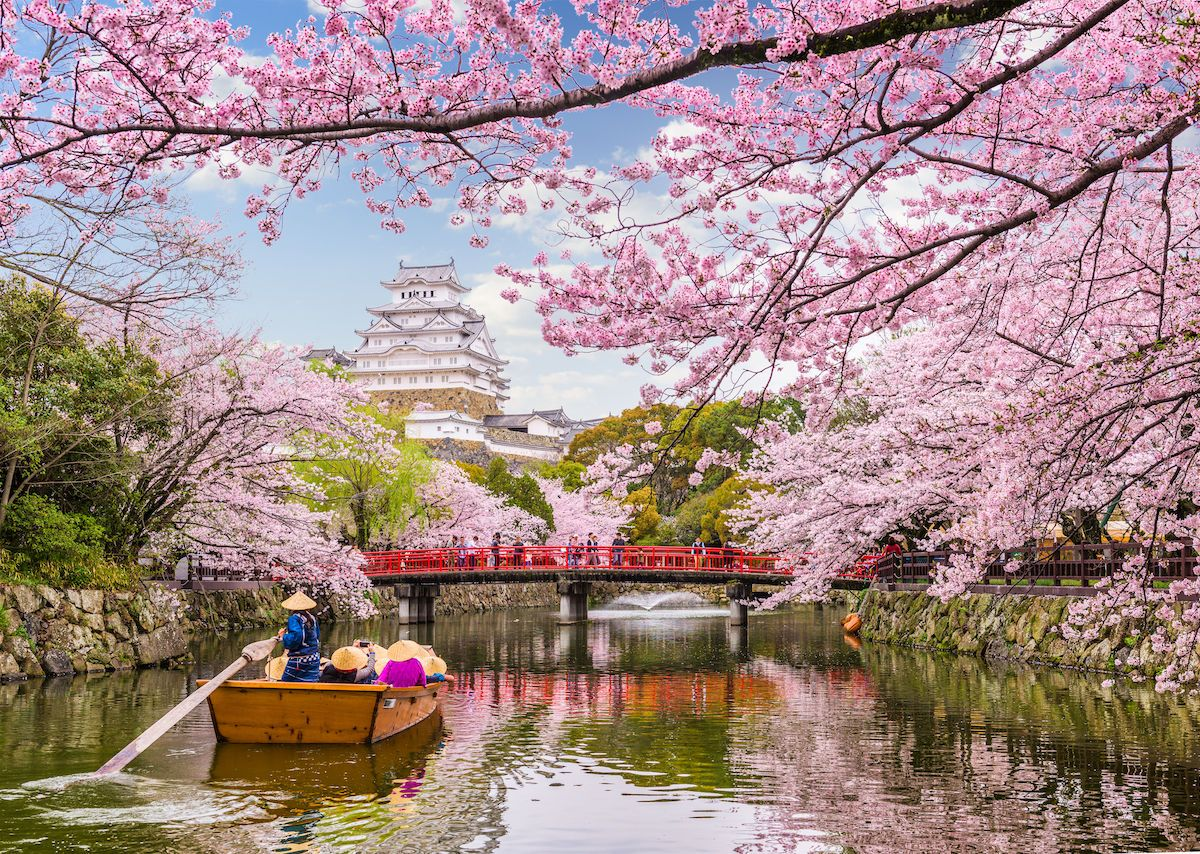 Everything You Need To Know About Japan S 2020 Cherry Blossom Season Cherry Blossom Japan Himeji Castle Cherry Blossom Season