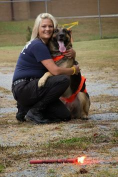Pin By Ark Naturals On Search And Rescue Dogs Military Working Dogs Military Dogs Military Service Dogs