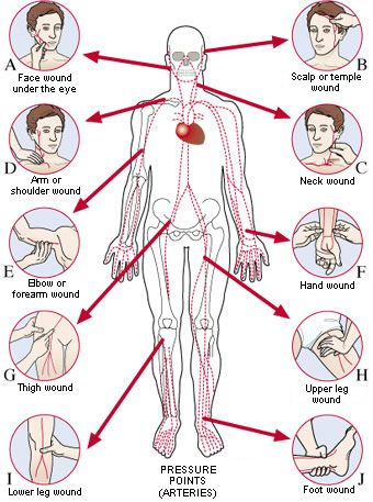 Human body picture showing arterial pressure points to stop a human body picture showing arterial pressure points to stop a hemorrhage ccuart Images