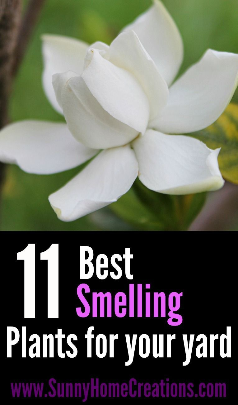 11 Best Smelling Plants For Your Yard Most Fragrant Plants Plants Landscaping Plants Amazing Gardens
