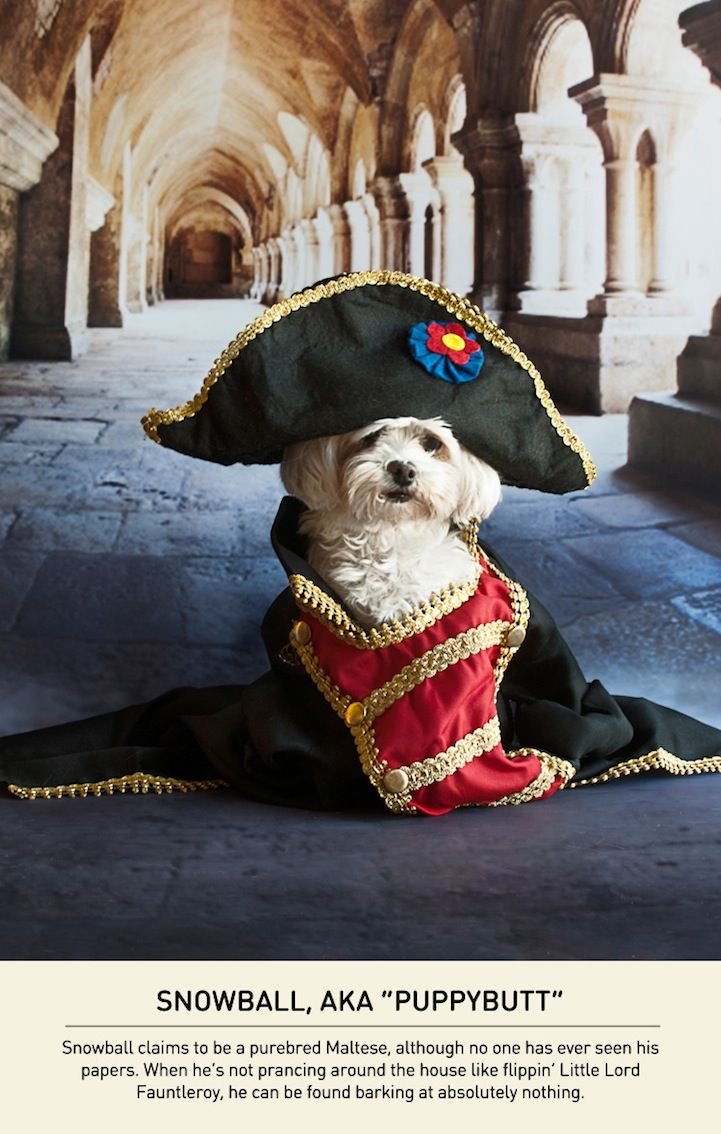 Hilarious Small Dogs with a Napoleon Complex Napoleon