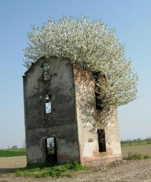 Abandoned House Taken Over By A Beautiful Tree