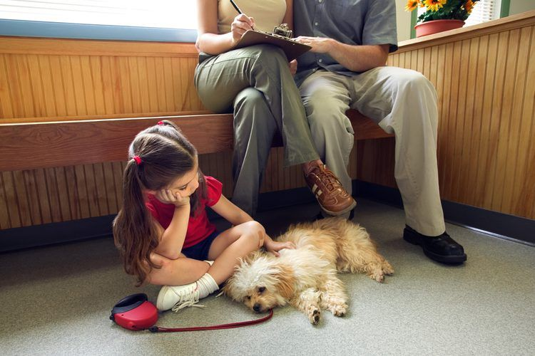 insuficiencia hepatica en perros
