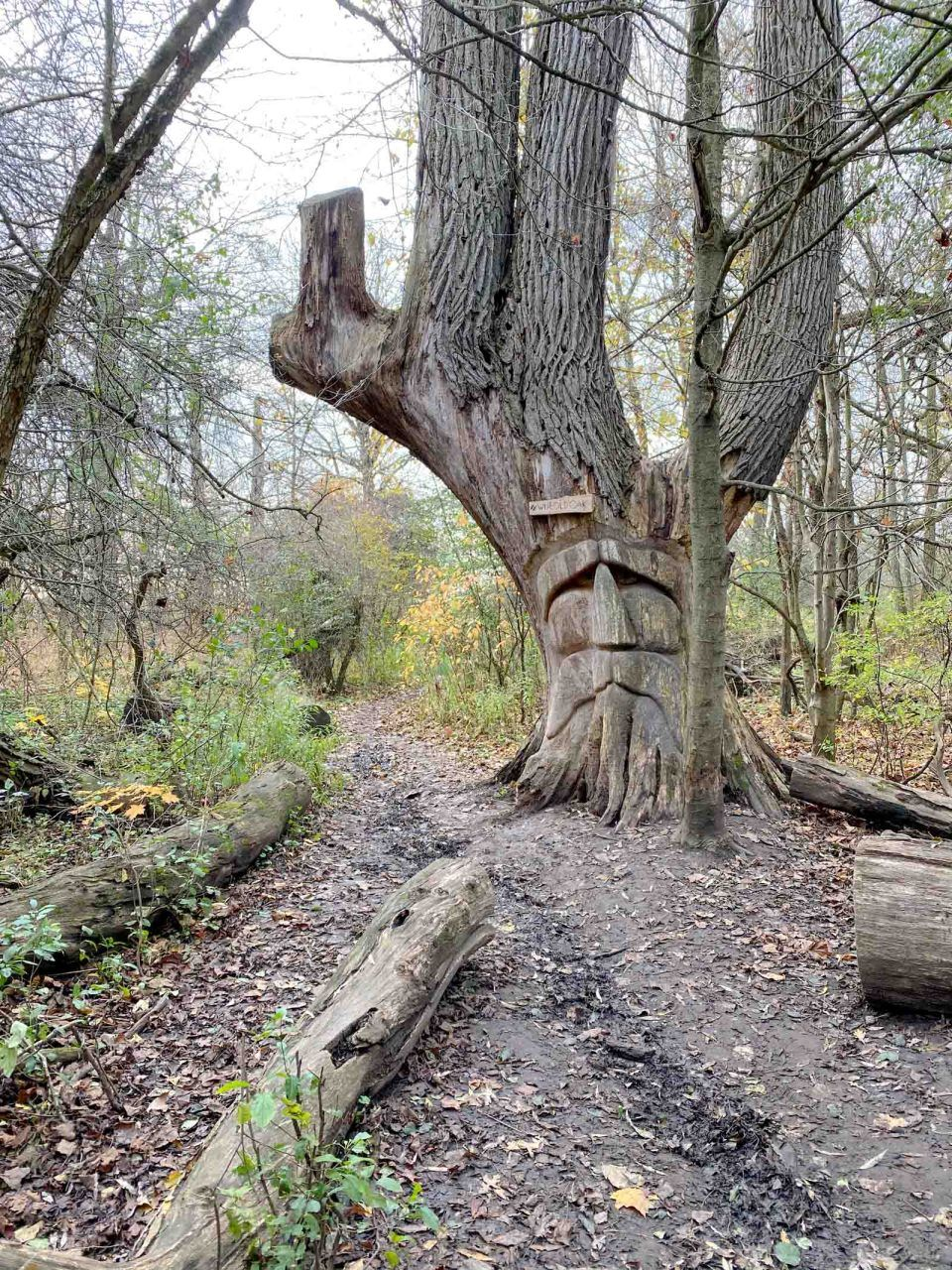 How To Find The Wise Old Oak Chic Everywhere Ontario Road Trip Canada Travel Day Trips