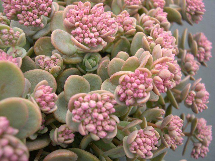 Plante Succulente Une Belle Vivace Pour Decorer L Exterieur