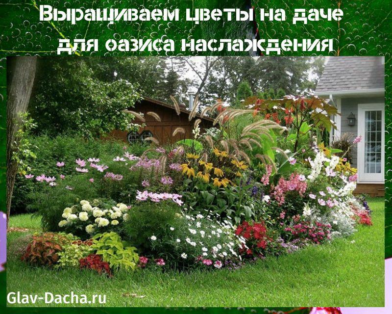 цветы вырастить на даче