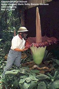 Weirdplants Biologia