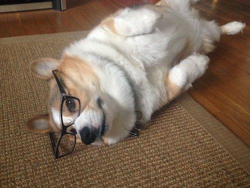 Has anyone seen my glasses??