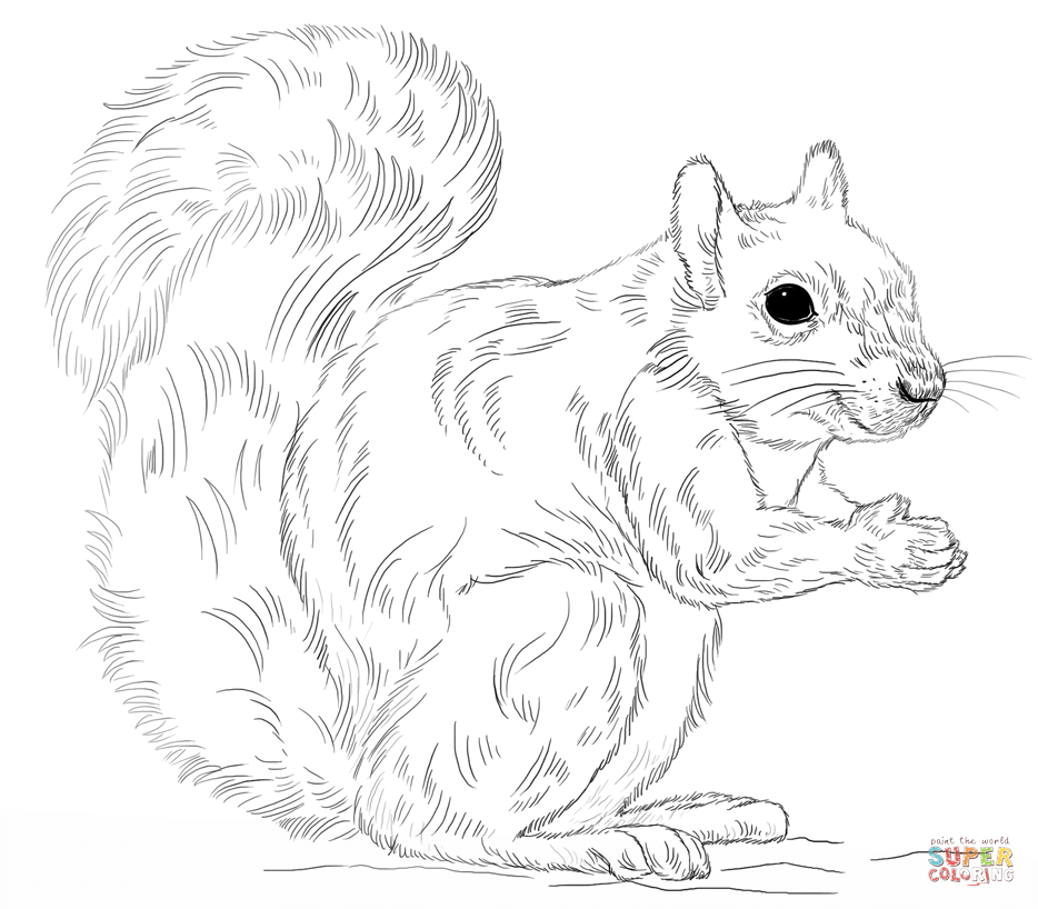eastern gray squirrel coloring page
