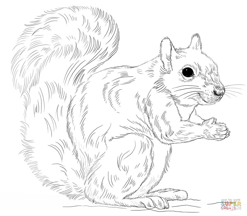 Eastern Gray Squirrel Coloring Page | Arts & Crafts ideas ...