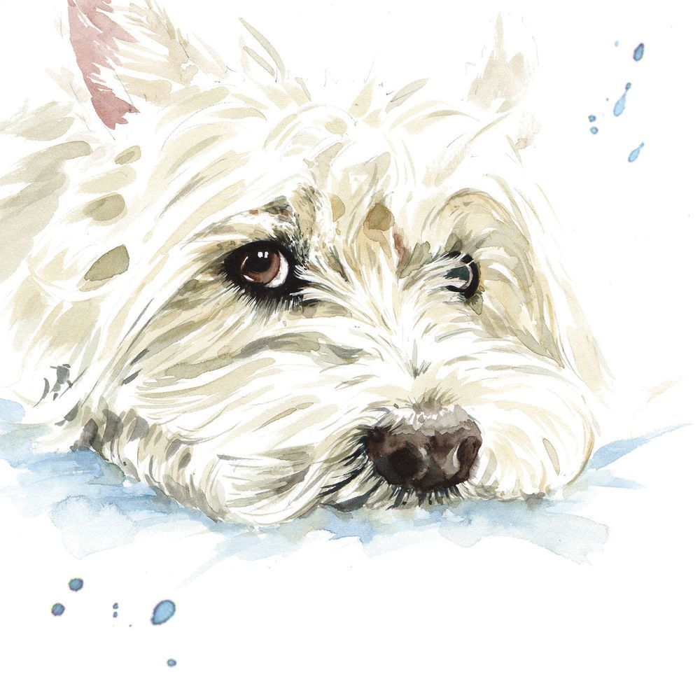 Westie Blank Greeting Card West Highland White Terrier Dog Any