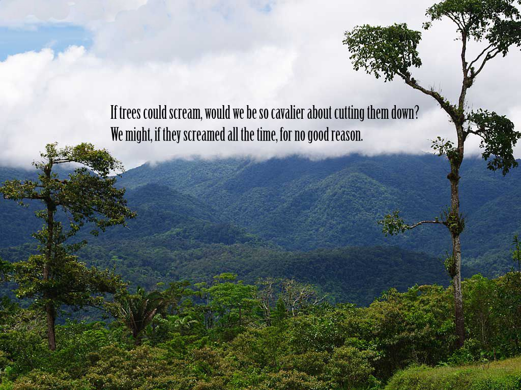 Nature Quotes 1024x768 Wallpaper Nature Quotes Save Nature Quotes Mother Nature Quotes