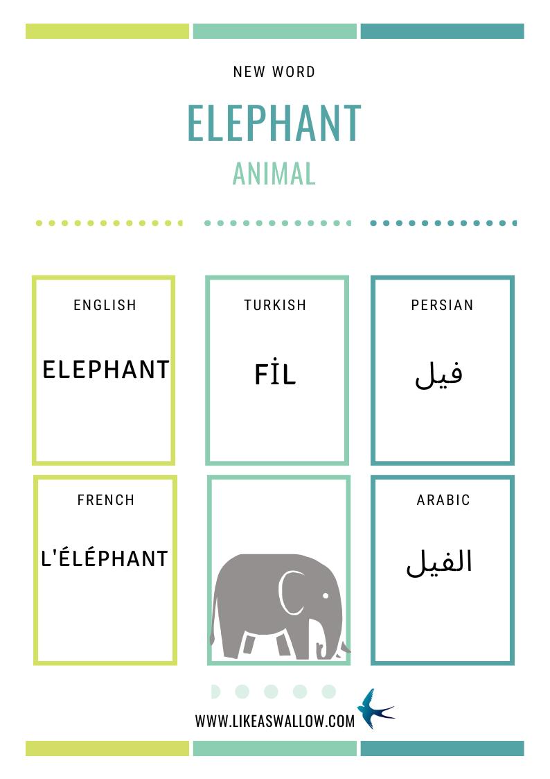 Name Of Animals In Different Languages French L Elephant English Elephant Arabic الفیل Turkish Fil Farsi Persian فیل List Of Animals Hayvanlar