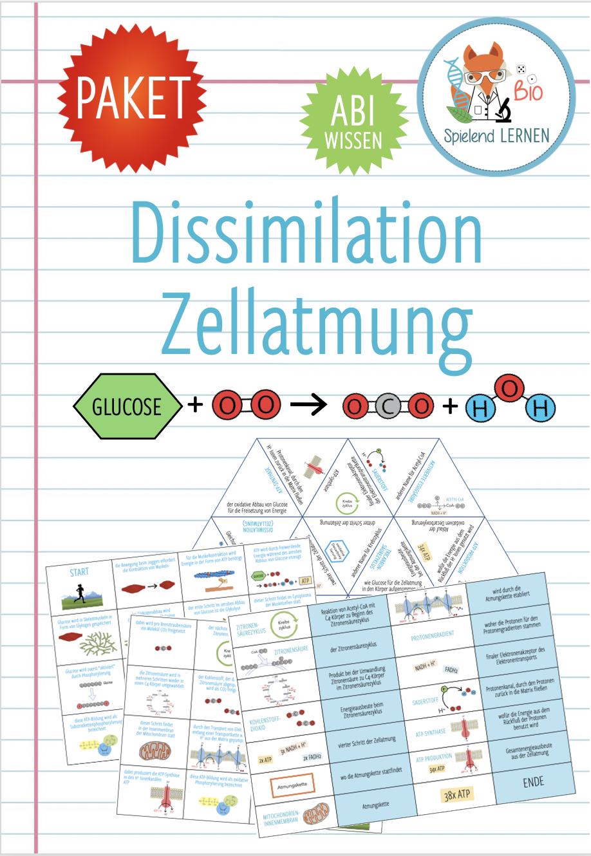 Dissimilation / Zellatmung & Gärung   20x Spiele und Aktivitäten ...