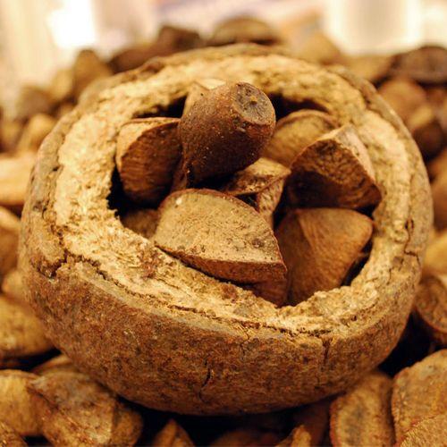 Frutas de A a Z - Castanha do Para é rica em proteínas, fibras e vitaminas A-B -C, cálcio, fósforo e ferro.