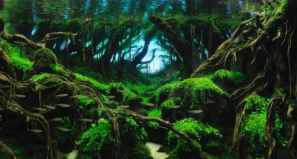 50 Best Aquascape Inpiration | Aquascape, Aquarium ...