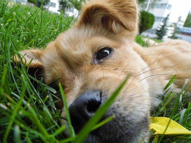 Studies Link Canine Cancers To Lawn Chemicals Mit Bildern