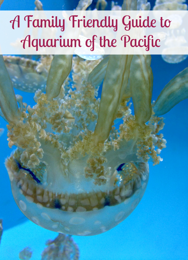 Aquarium Of The Pacific In Long Beach Long Beach Aquarium Long Beach California Long Beach